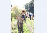 【うつのみや】親子で地元農家と「稲刈り」を体験