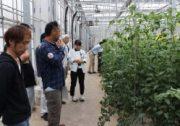 【しもつけ】若手トマト生産者・後継者の栽培研究会「ゆめファーム十千木塾」を開催します